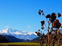 Blick von Natters Richtung Westen zum Rnggerköpfel Triol_Austria
