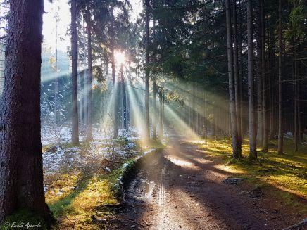 Im Wald beim Gasthof zur Eiche Natters bei Innsbruck Tirol-Austria